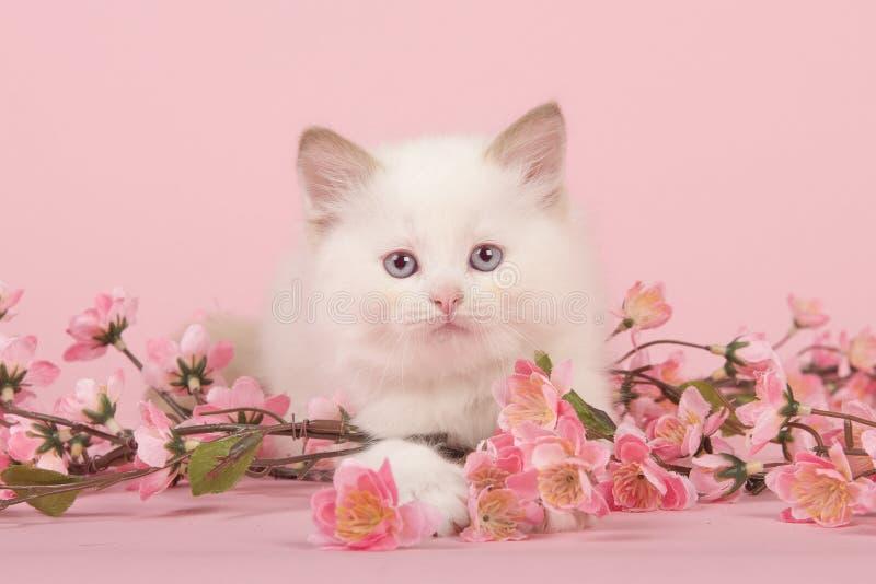 Gałganianej lali dziecka kot kłama na podłoga patrzeje kamerę między menchiami z niebieskimi oczami kwitnie na różowym tle zdjęcia stock