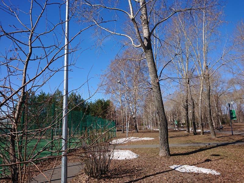 Gałąź drzewo przeciw niebieskiemu niebu obraz stock