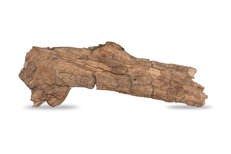 Ga??ziastego drzewa zmroku sucha krakingowa barkentyna odizolowywaj?ca na bia?ym tle ?cinek ?cie?ka fotografia royalty free