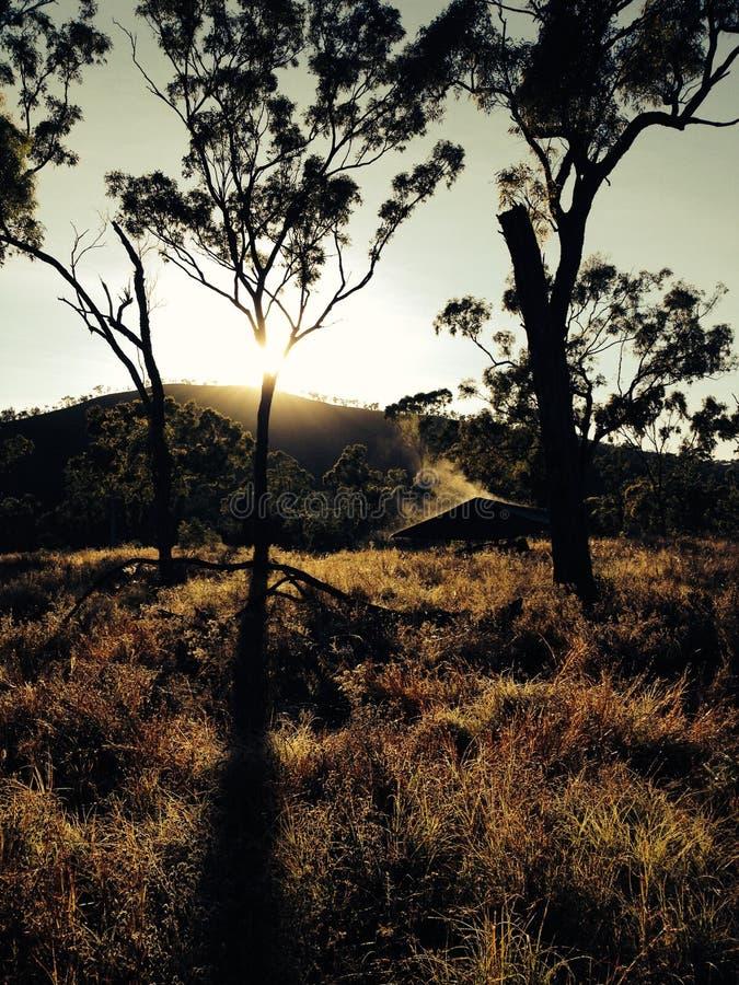Gaande struik dichtbij Townsville Queensland royalty-vrije stock foto