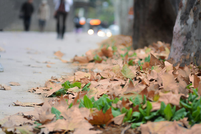 Gaat in de herfst weg stock afbeelding