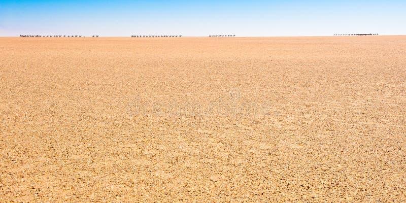 Gaat zoute Caravan verder in de Sahara - achter de horizon? royalty-vrije stock afbeeldingen