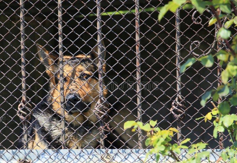 Gabbia del cane fotografie stock libere da diritti