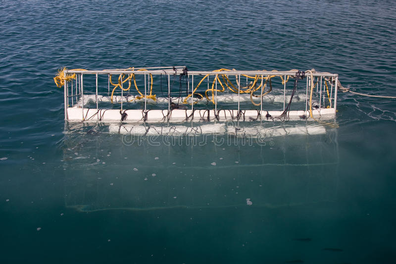 Gabbia dello squalo fotografie stock libere da diritti