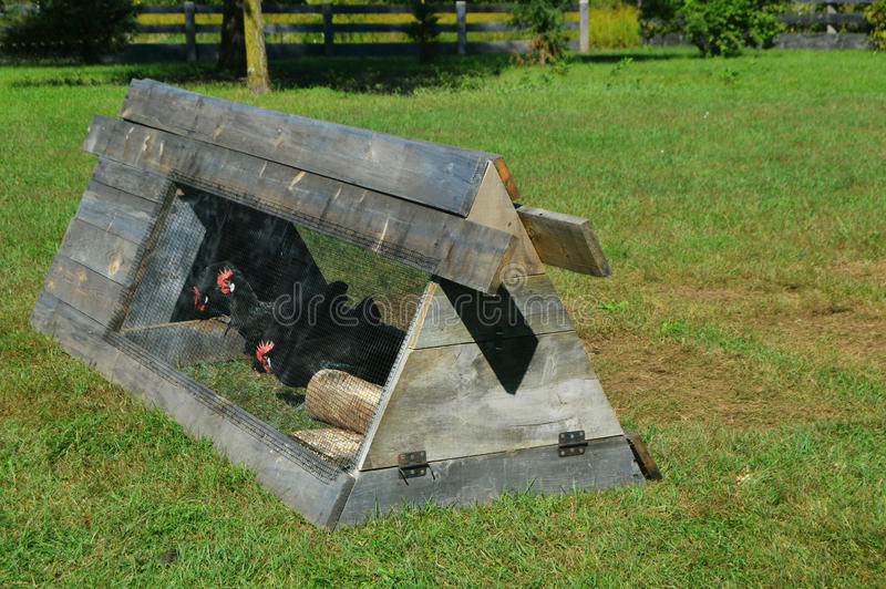 Gabbia di pollo fotografia stock libera da diritti