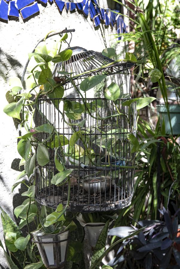 Gabbia per uccelli con le piante fotografia stock