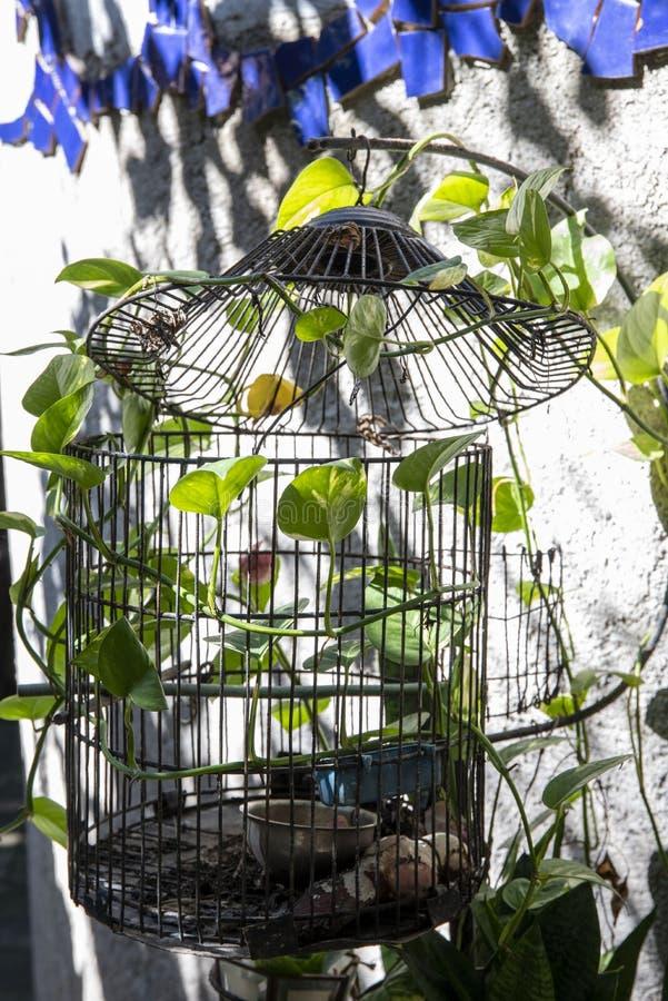 Gabbia per uccelli con le piante fotografie stock