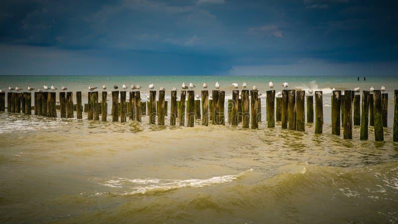 Gabbiani alla spiaggia immagini stock