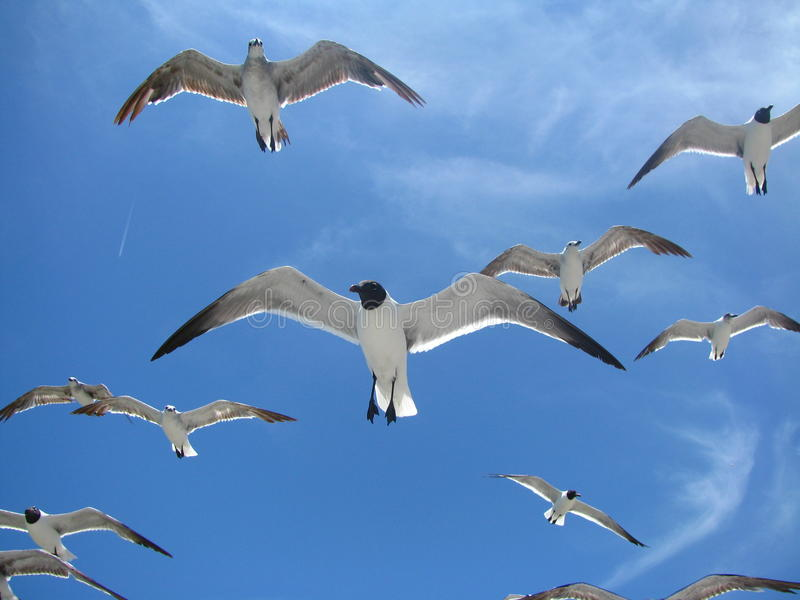 Gabbiani alla spiaggia di Higgs in Key West immagini stock
