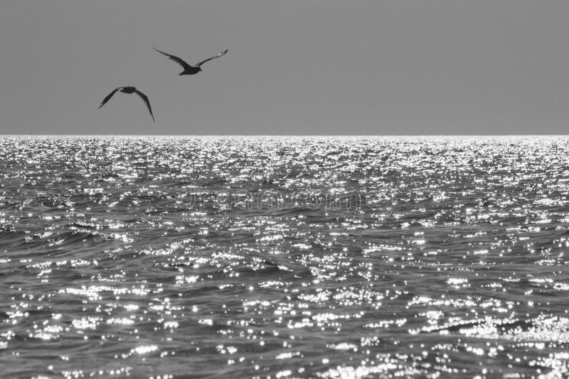Gabbiani in ascesa sopra il mare nei raggi del sole al tramonto di estate fotografia stock