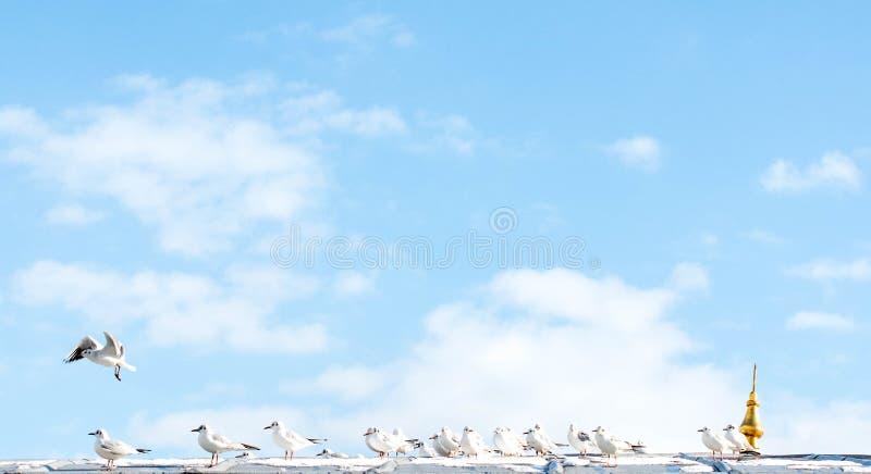 Gabbiani che si siedono sopra un tetto fotografie stock libere da diritti