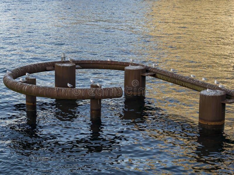 Gabbiani che si siedono sul tubo arrugginito fotografie stock libere da diritti