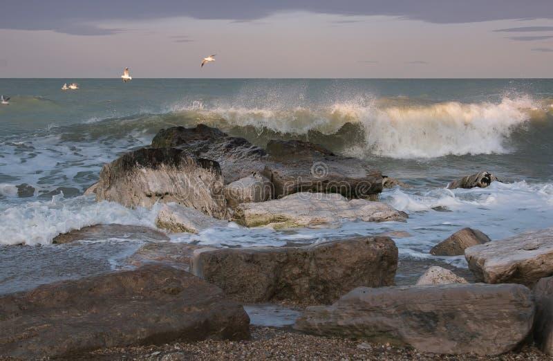 Gabbiani che sorvolano mare tempestoso nella regione della Marche, Italia fotografia stock