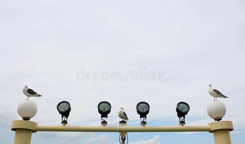 Gabbiani che stanno sullo sportlight fotografia stock