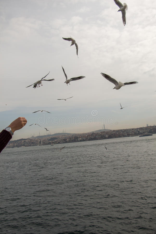 Gabbiani che volano in cielo a Costantinopoli immagine stock