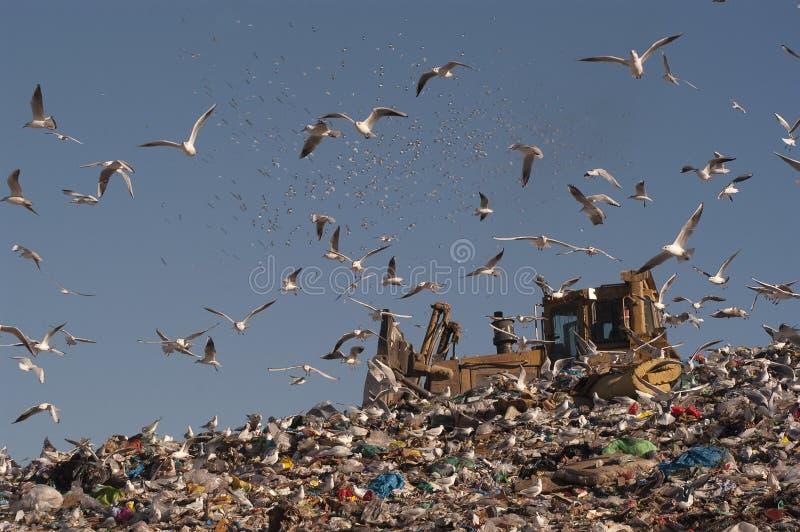 Gabbiani che volano nei rifiuti fotografia stock libera da diritti