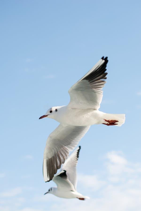 Gabbiani in cielo immagine stock libera da diritti
