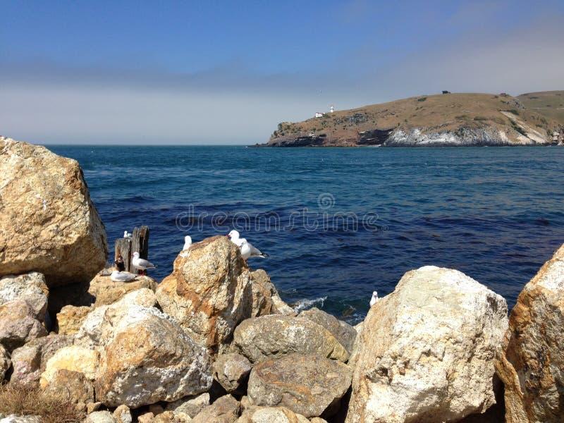 Gabbiani di Aramoana immagine stock