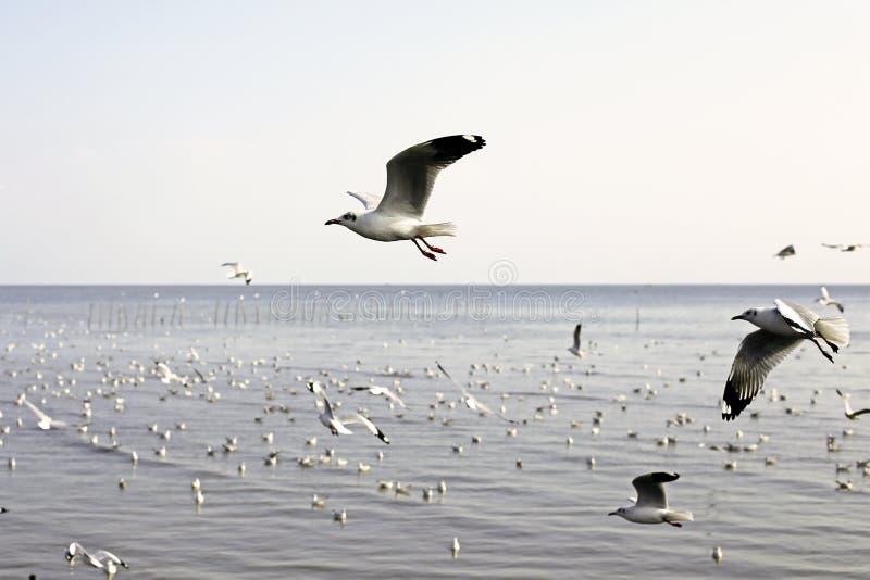 Gabbiani migratori fotografia stock libera da diritti