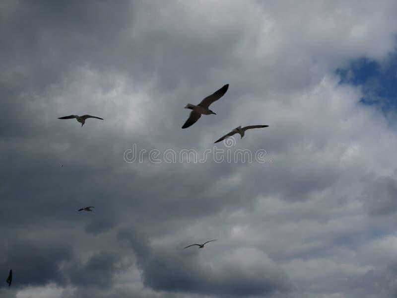 Gabbiani nel cielo immagini stock libere da diritti
