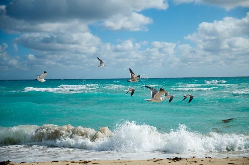 Volo dei gabbiani sopra la spiaggia fotografia stock libera da diritti