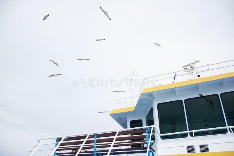 Gabbiani sopra il traghetto immagini stock libere da diritti