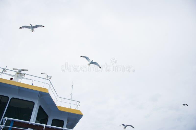Gabbiani sopra il traghetto fotografia stock libera da diritti