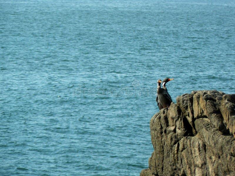 Gabbiani sopra le rocce in mare fotografie stock libere da diritti