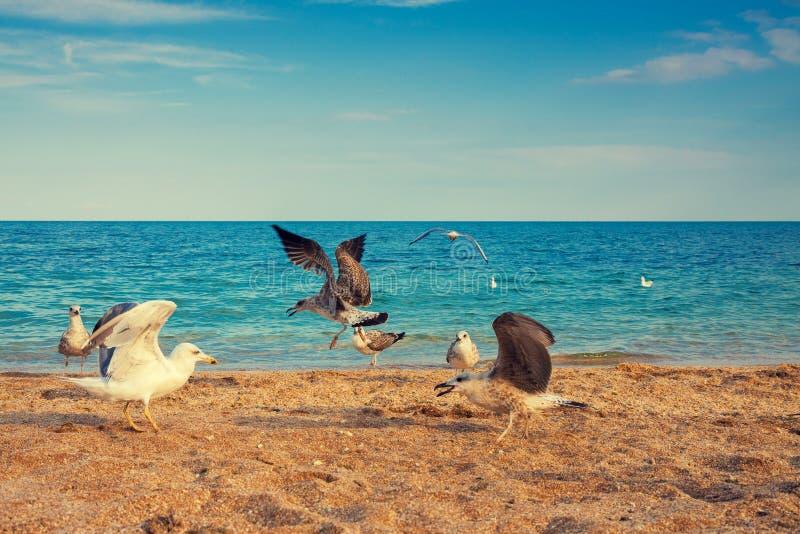 Gabbiani su una spiaggia abbandonata immagini stock