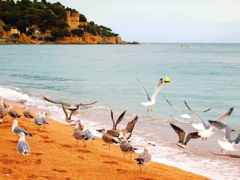 Gabbiani sulla bella spiaggia in Spagna fotografia stock libera da diritti