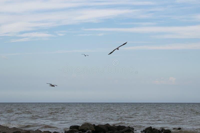 Gabbiani sulla spiaggia I gabbiani sorvolano il mare immagine stock
