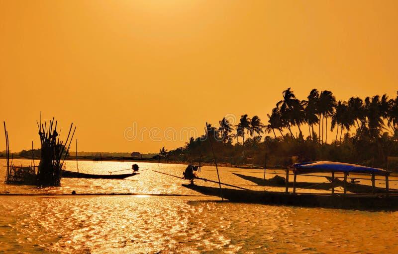 Gabbiani uccelli Chilika lago puri l'Orissa l'India 30 marzo 2019 fotografia stock libera da diritti