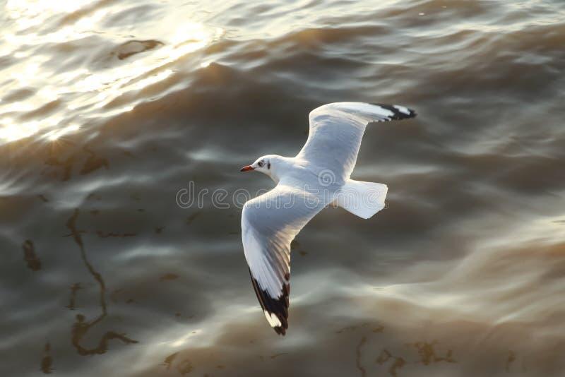 Gabbiani volanti di vista superiore in oceano immagine stock libera da diritti