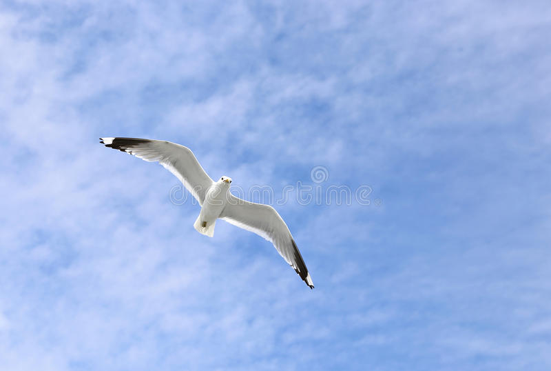 Gabbiano bianco Mediterraneo fotografie stock libere da diritti