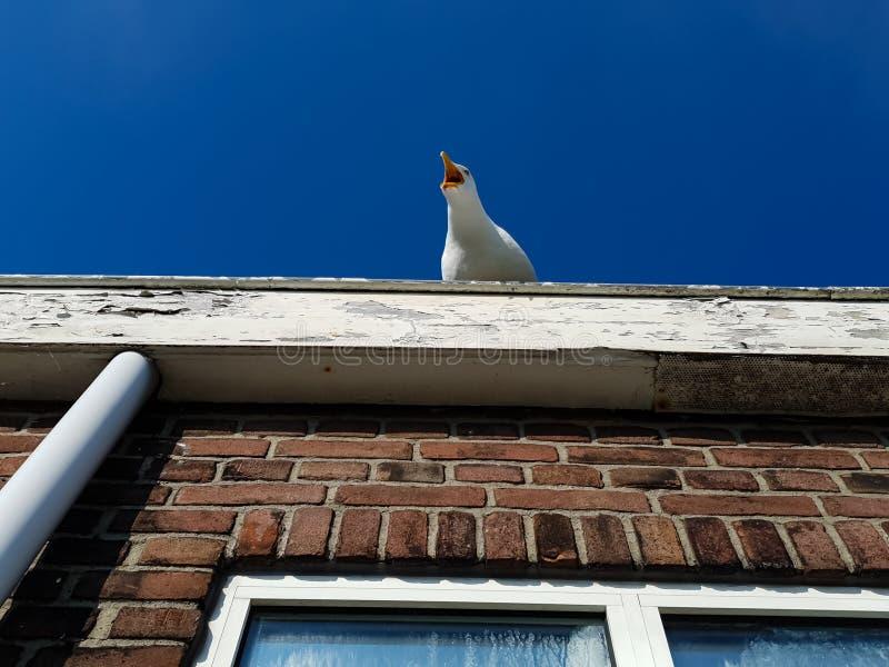 Gabbiano che si siede sul tetto sotto un cielo blu fotografie stock