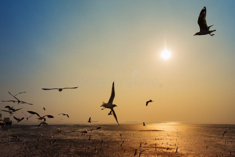 Gabbiano con il tramonto sul mare a Bangpu, Tailandia fotografie stock