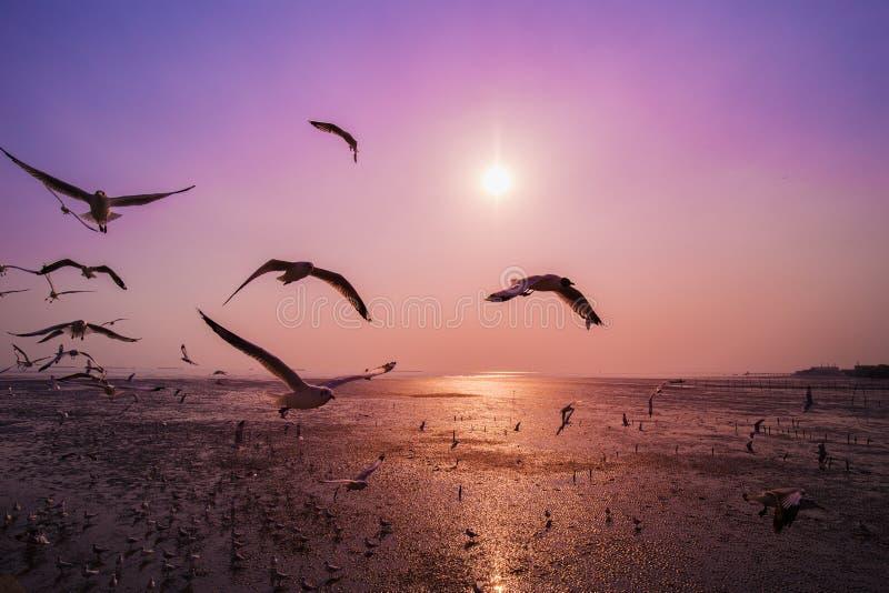 Gabbiano con il tramonto sul mare a Bangpu, Tailandia fotografia stock libera da diritti