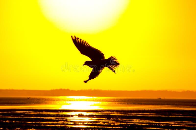 Gabbiano di tramonto fotografia stock libera da diritti