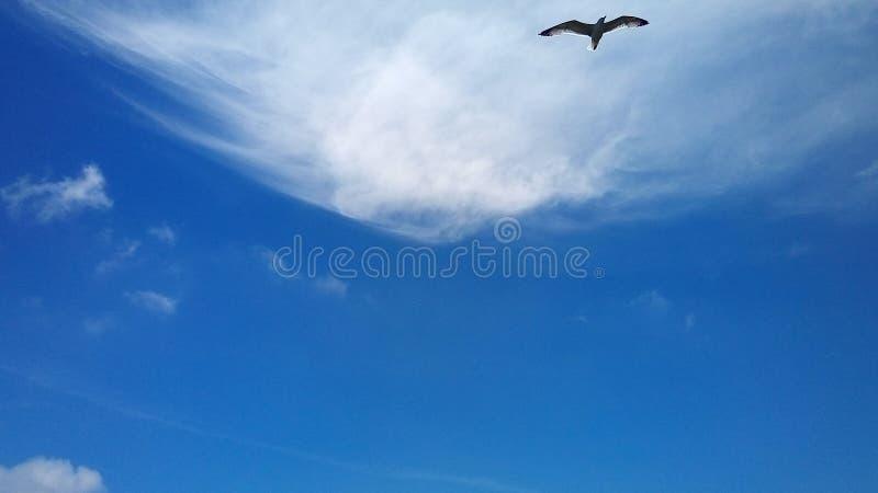 Gabbiano di volo nel cielo blu fotografia stock