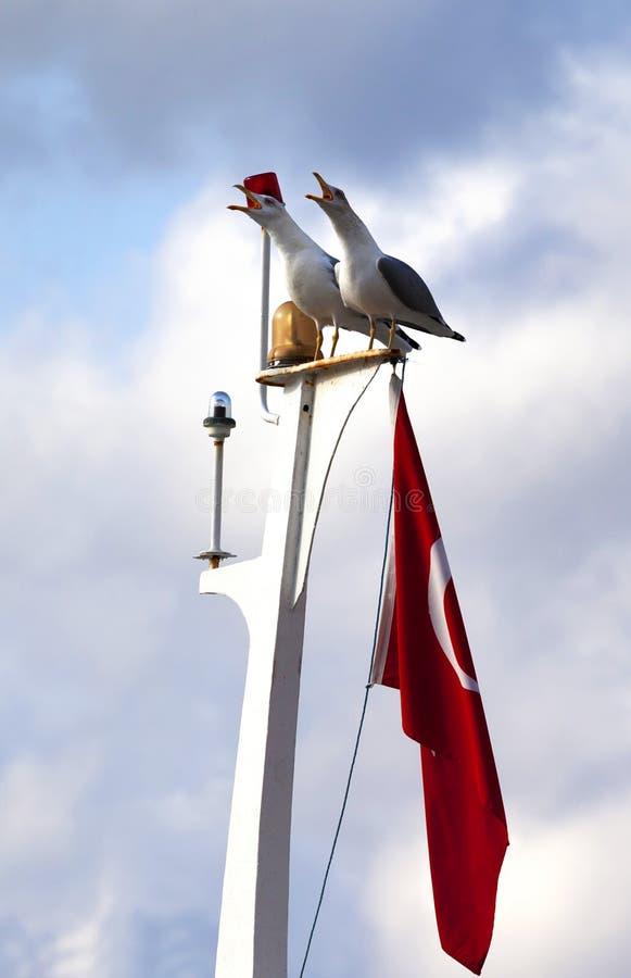 Gabbiano due sull'albero della barca con la bandiera del turco fotografie stock