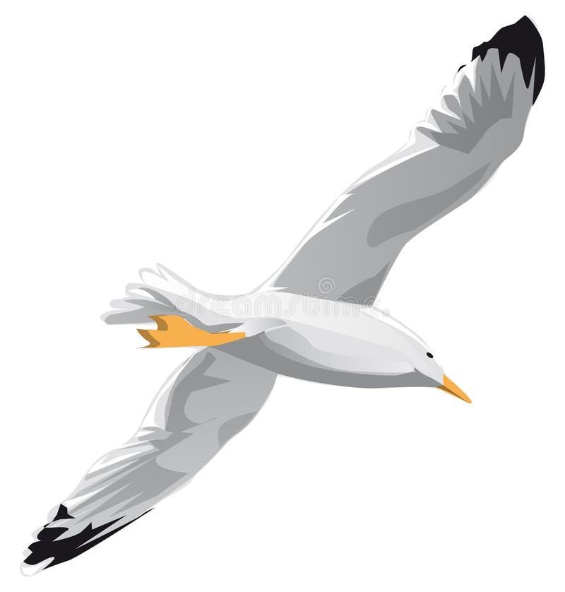 Gabbiano durante il volo illustrazione vettoriale