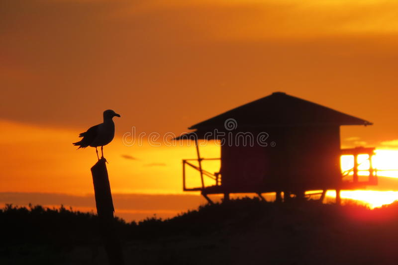 Gabbiano nell'alba di acrobazie sulla spiaggia fotografie stock