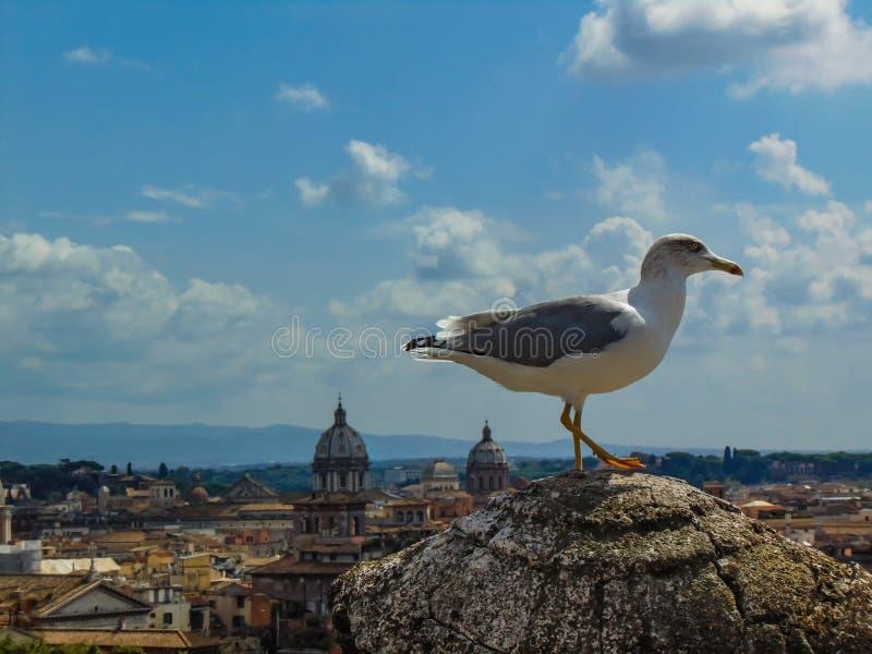 Gabbiano a Roma fotografie stock