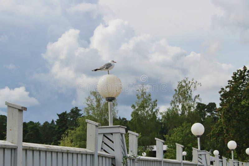 Gabbiano su una gamba su una lampada di via Karlstad, Svezia immagine stock libera da diritti