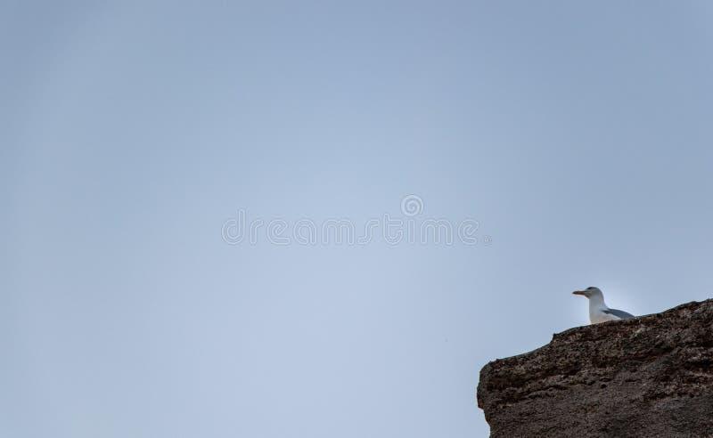 Gabbiano su una roccia fotografie stock