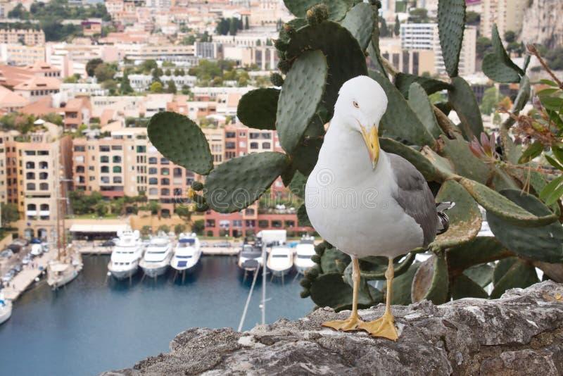 Gabbiano su una roccia nel Monaco fotografia stock