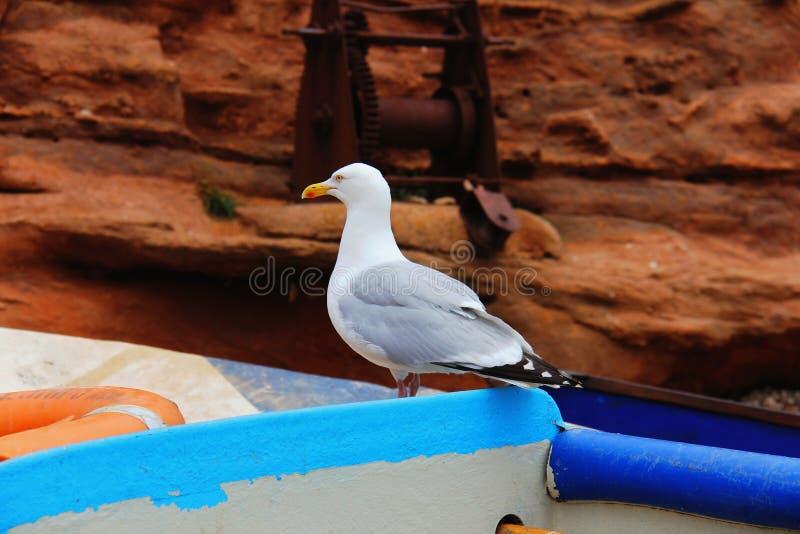 Gabbiano su una vecchia barca immagini stock libere da diritti