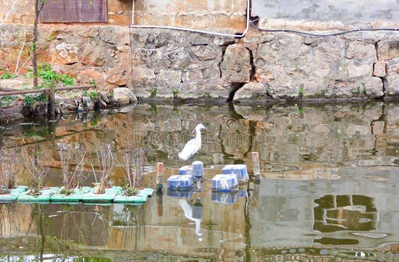 Gabbiano sul lago fotografie stock