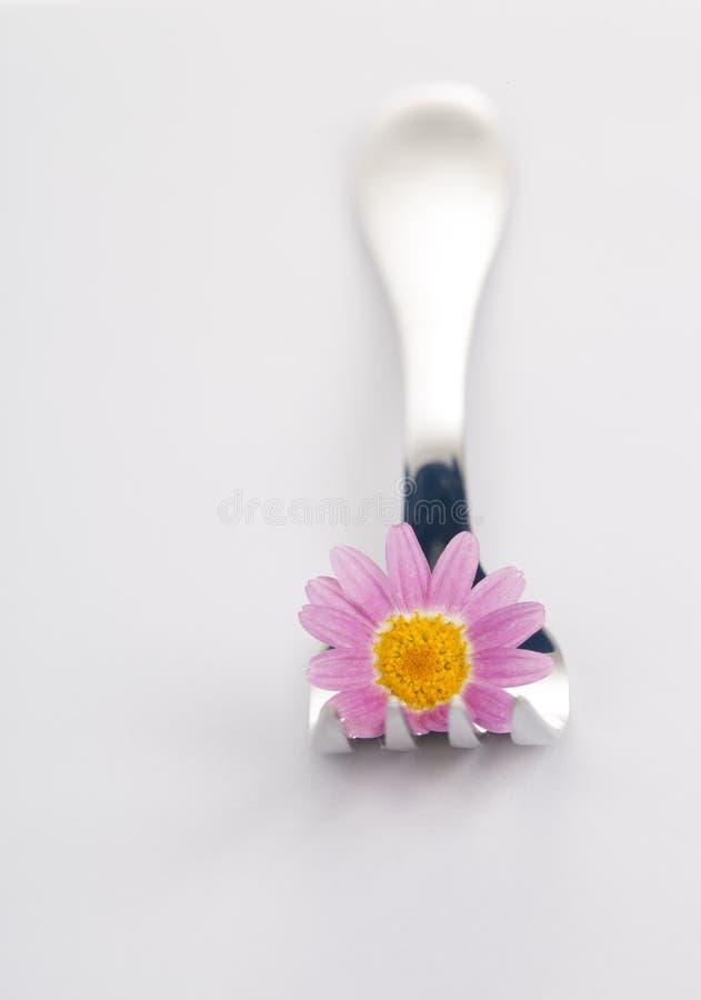 Gabel- und Gänseblümchenblume stockfotos