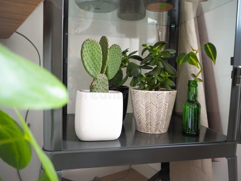 Gabinetto industriale del metallo riempito di piante verdi quali il cactus ed i succulenti dell'opunzia fotografie stock